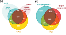 Comparative gene repertoire of Wolbachia strains, including wPpe from P. penetrans