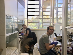 Working in the heat of Brazil's summer to characterize membracid symbioses.